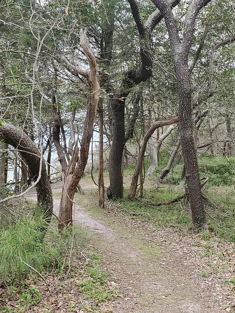 Kiptopeke State Park VA May 2021