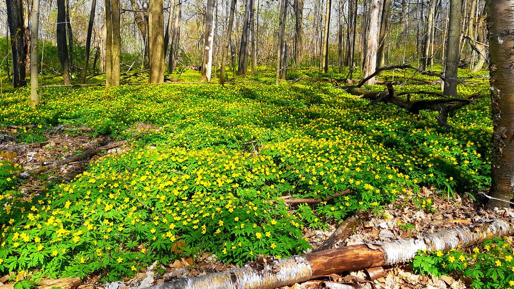 A magical woodland carpet....HSS!