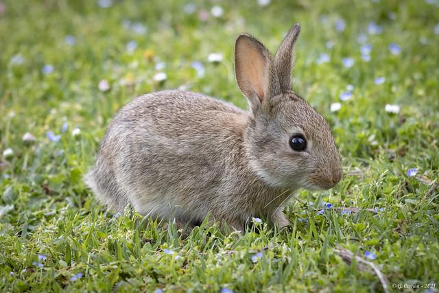 Ce matin.... un petit lapin sur mon chemin 🐇💖(Savoie 05/2021)