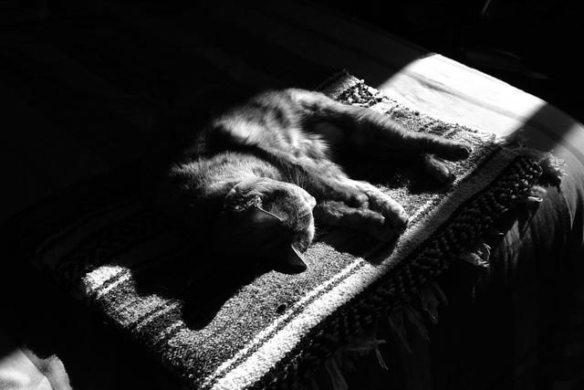kiri mid morning nap