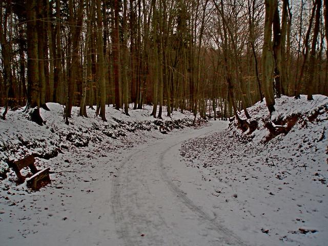 2009-02-14 Sopot - spacer na Bukową Polanę (46)