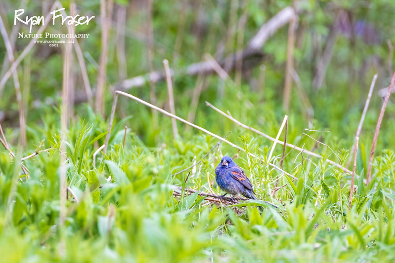 Birding with the 600 F4 L III