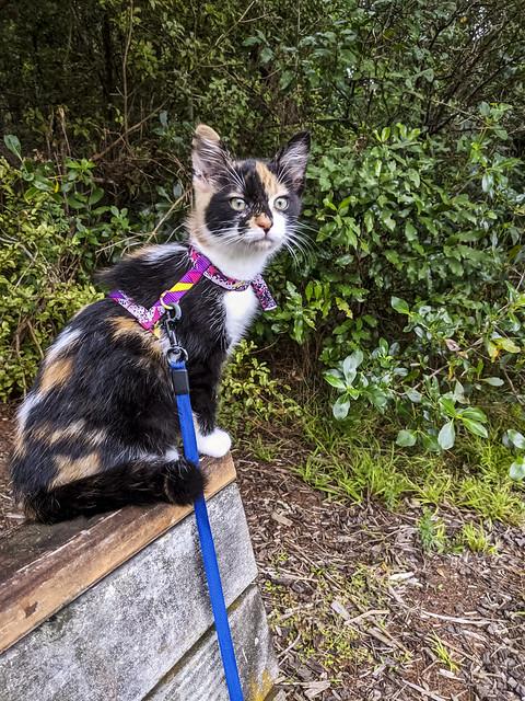 Mizuki's First Bush Walk