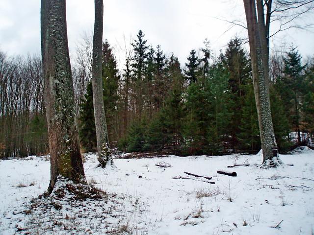 2009-02-14 Sopot - spacer na Bukową Polanę (30)