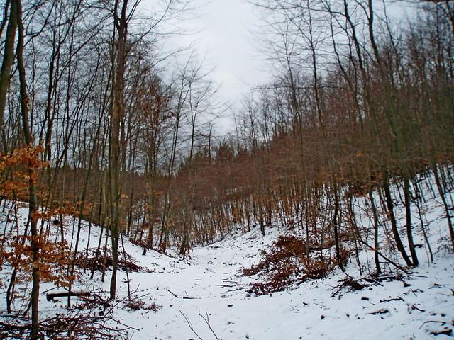 2009-02-14 Sopot - spacer na Bukową Polanę (28)
