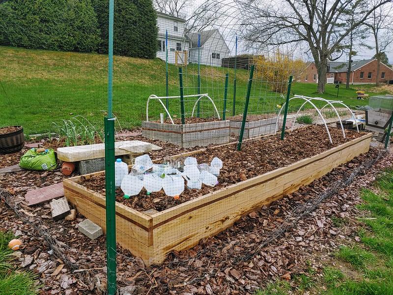 Vegetable Garden from the Northeast