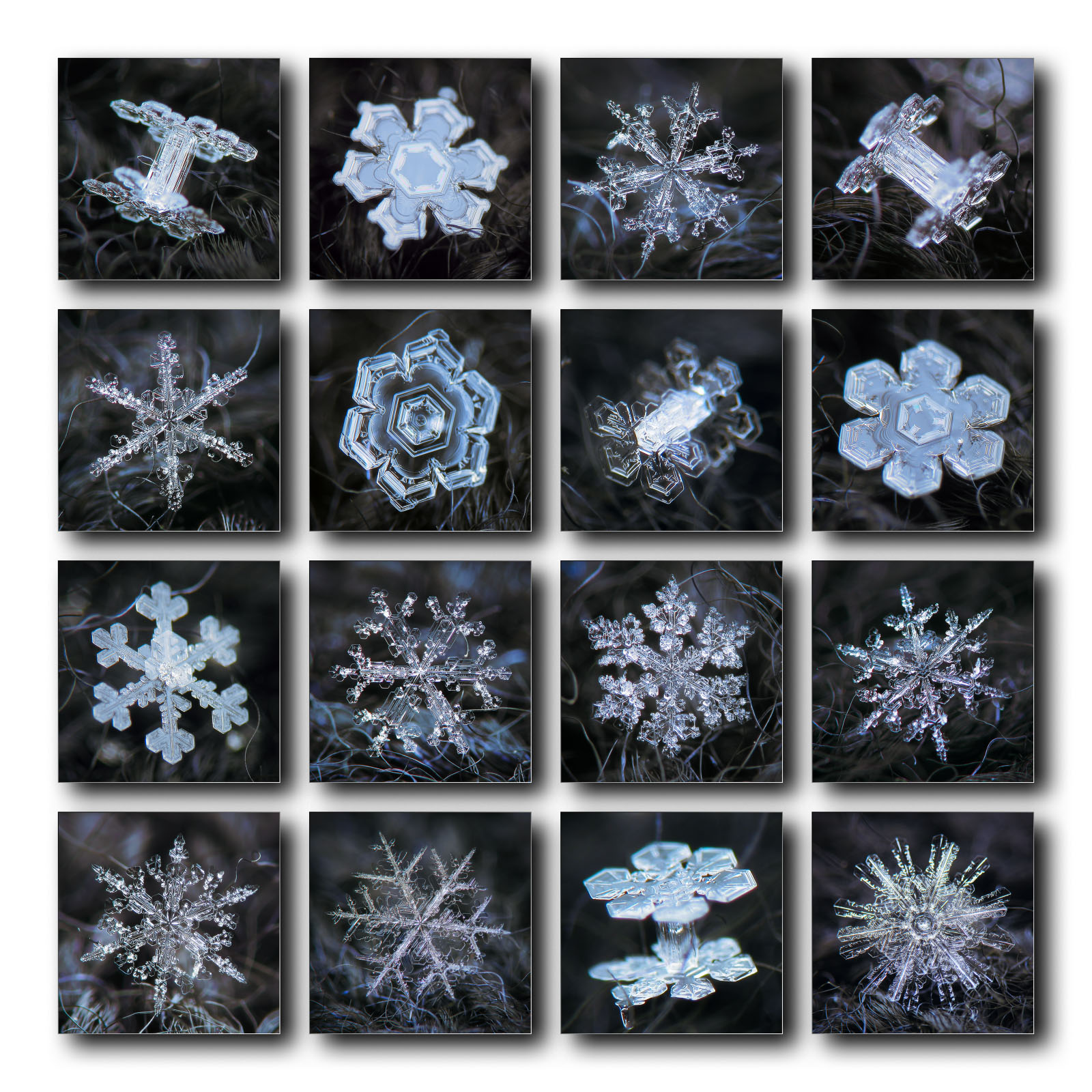 Collection of 16 snowflakes, four variants, full resolution lossless images - downloads at patreon.com/alexeykljatov