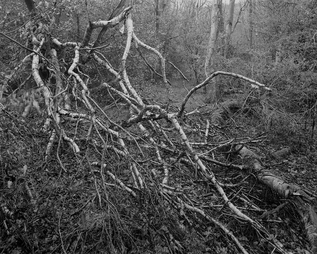 Hyons Wood, Walker Titan SF with Nikkor 90mm, Rollei Ortho 25+@ISO40 in HC110