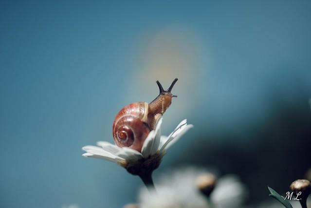 Snail view