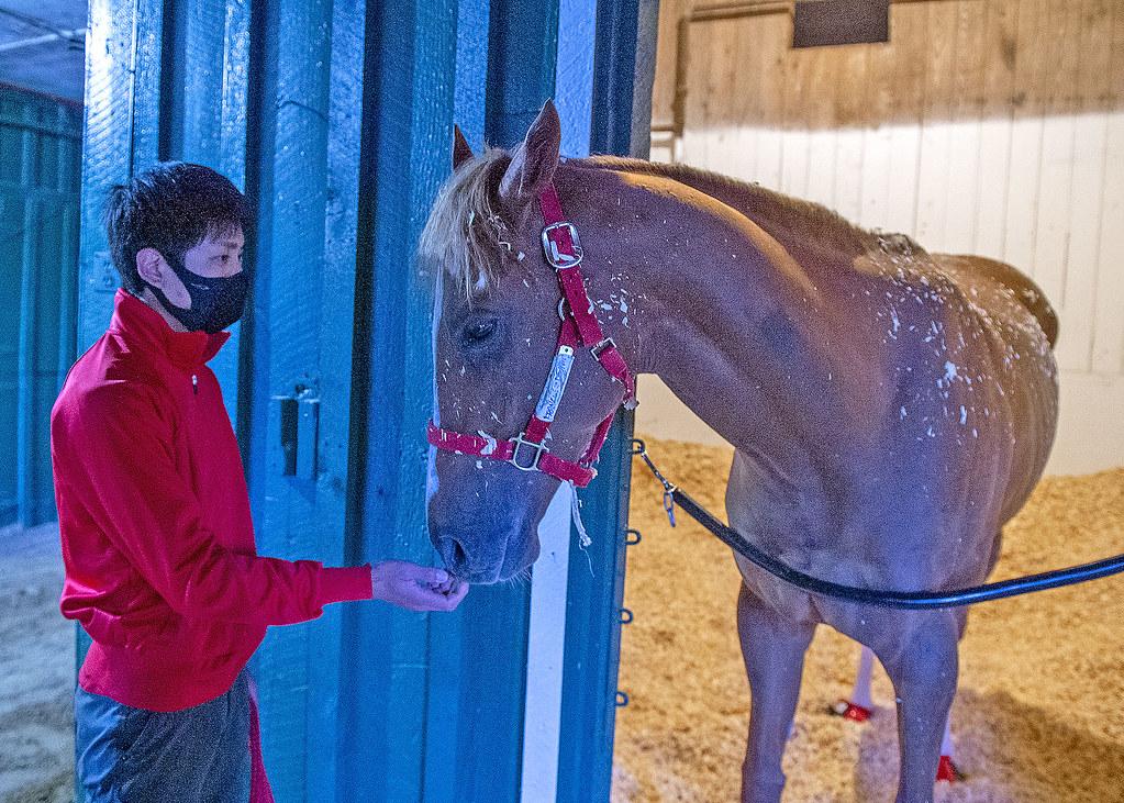 france go de ina. Photo by Maryland Jockey Club.