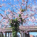 Urban Spring nature in Preston