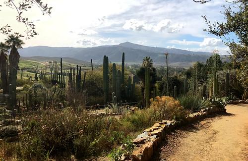 sandiego california sandiegozoo safaripark landscape californianativescapesgarden