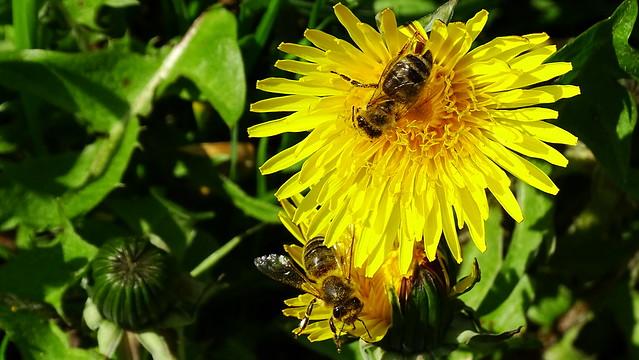 Fleissige Bienen- Busy Bees
