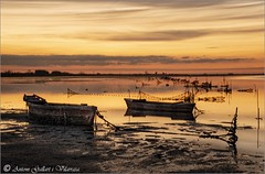Warm and silent dawn. (Delta de L'Ebre - Catalonia)