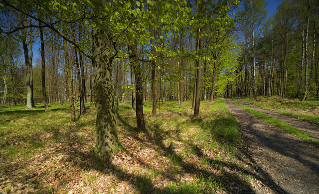 Spring forest.