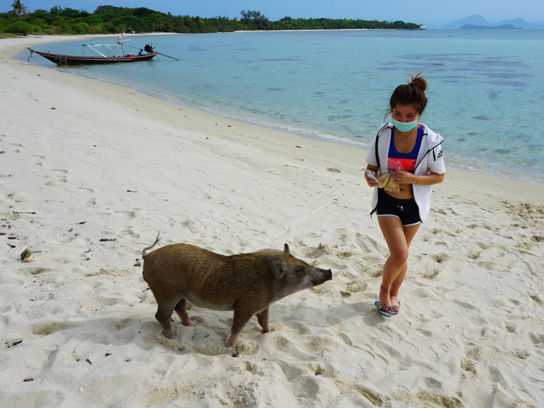 koh madsum pig island