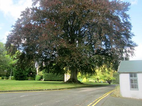 Bletchley Park Tree