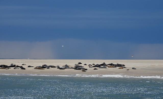 Engelschhoek - zeehonden