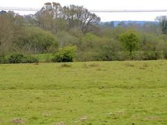 Fox on the run, River Park Farm, Lurgashall 3/5/21