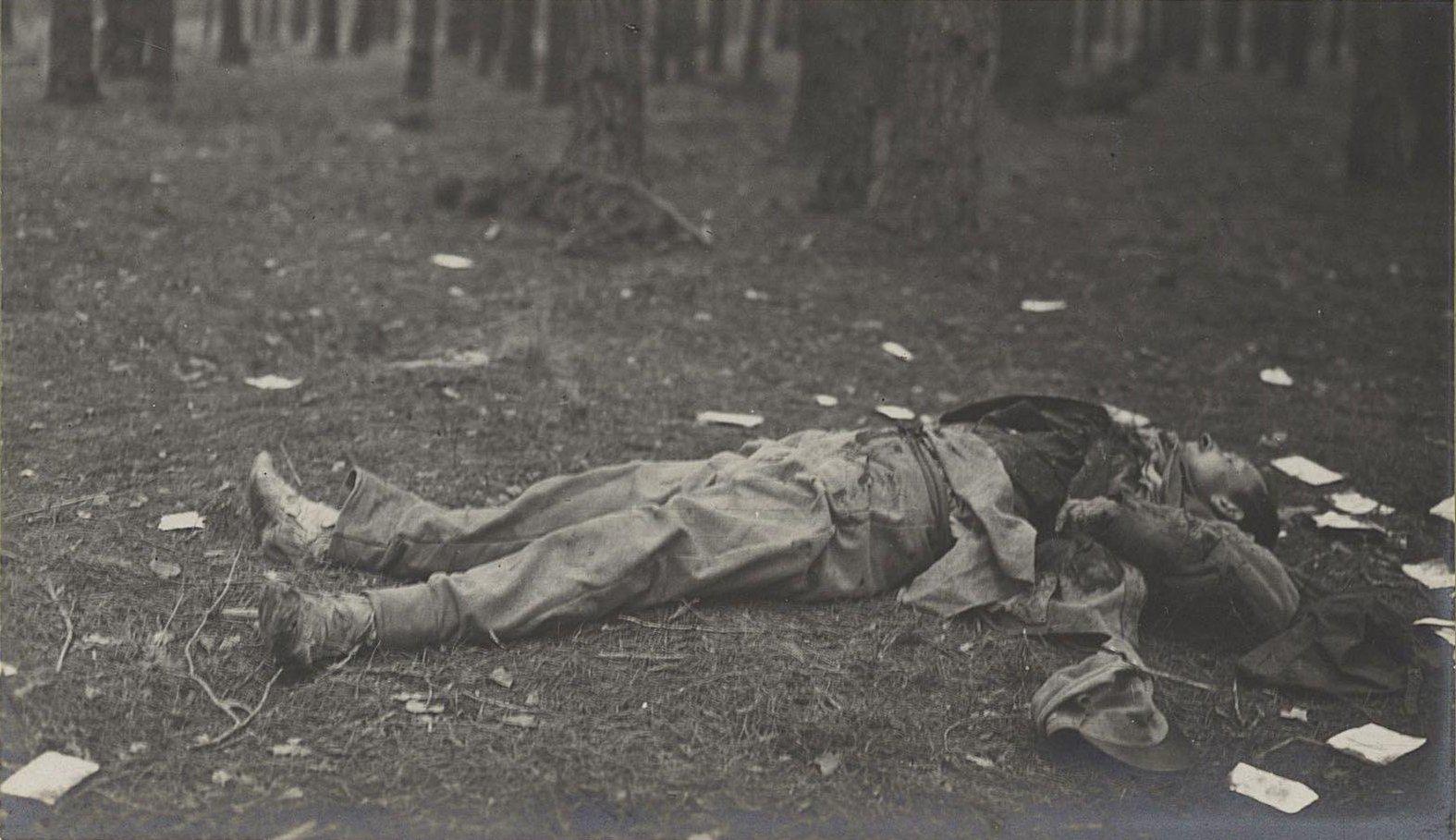 132. Трупы австрийцев нижних чинов, погибших при отступлении германцев от Вислы, в Августовском лесу у Козениц
