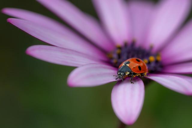 365 - Image 129 - Ladybird...