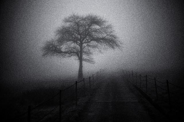magic fog /14