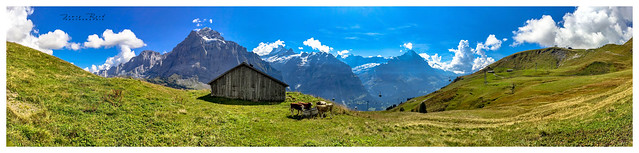 Bort / First - Alpes Suisses - Oberland Bernois