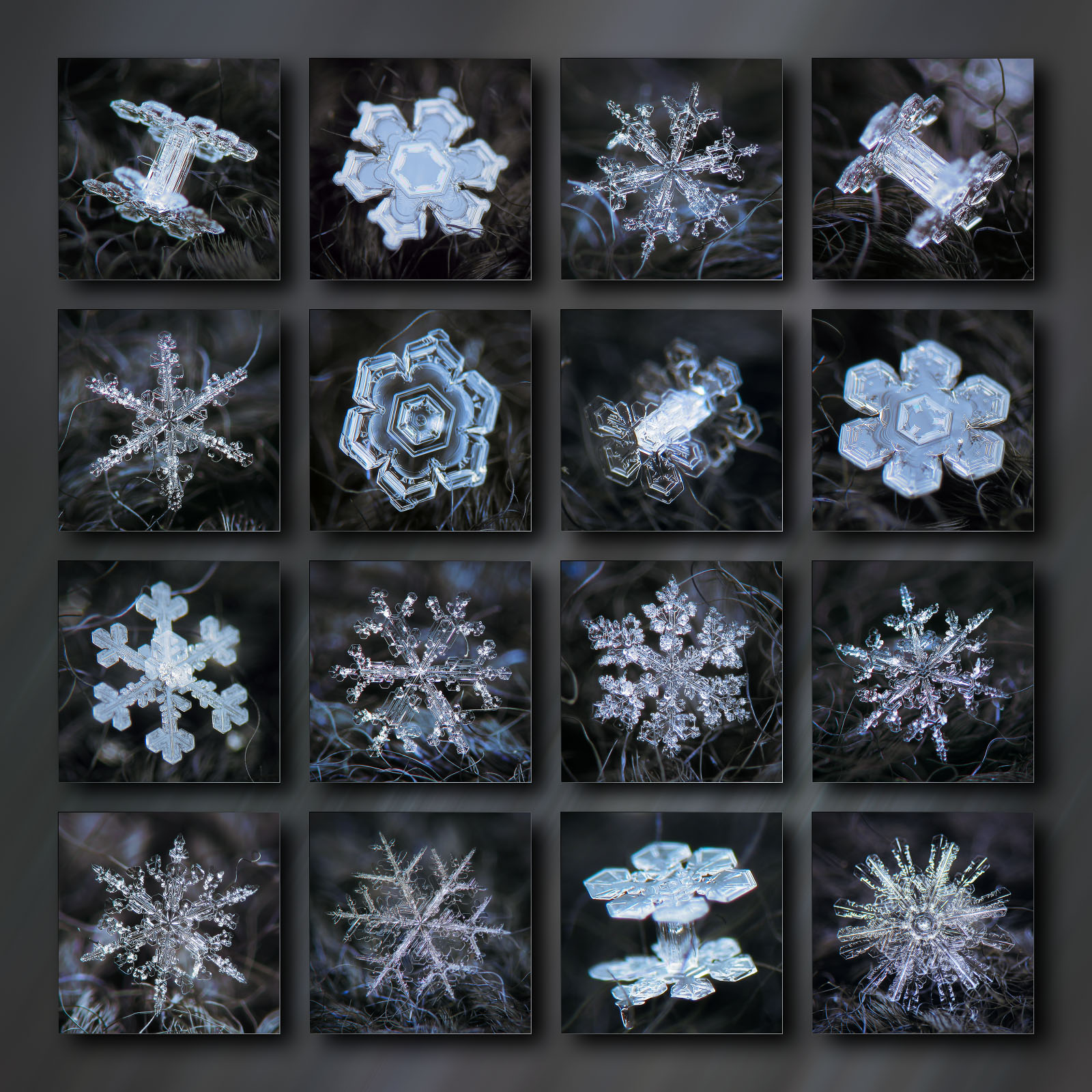Collection of 16 real snowflakes glowing on dark background - prints at alexey-kljatov.pixels.com