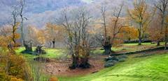 Riós (Ourense, Galicia, Sp) – A Carballeira