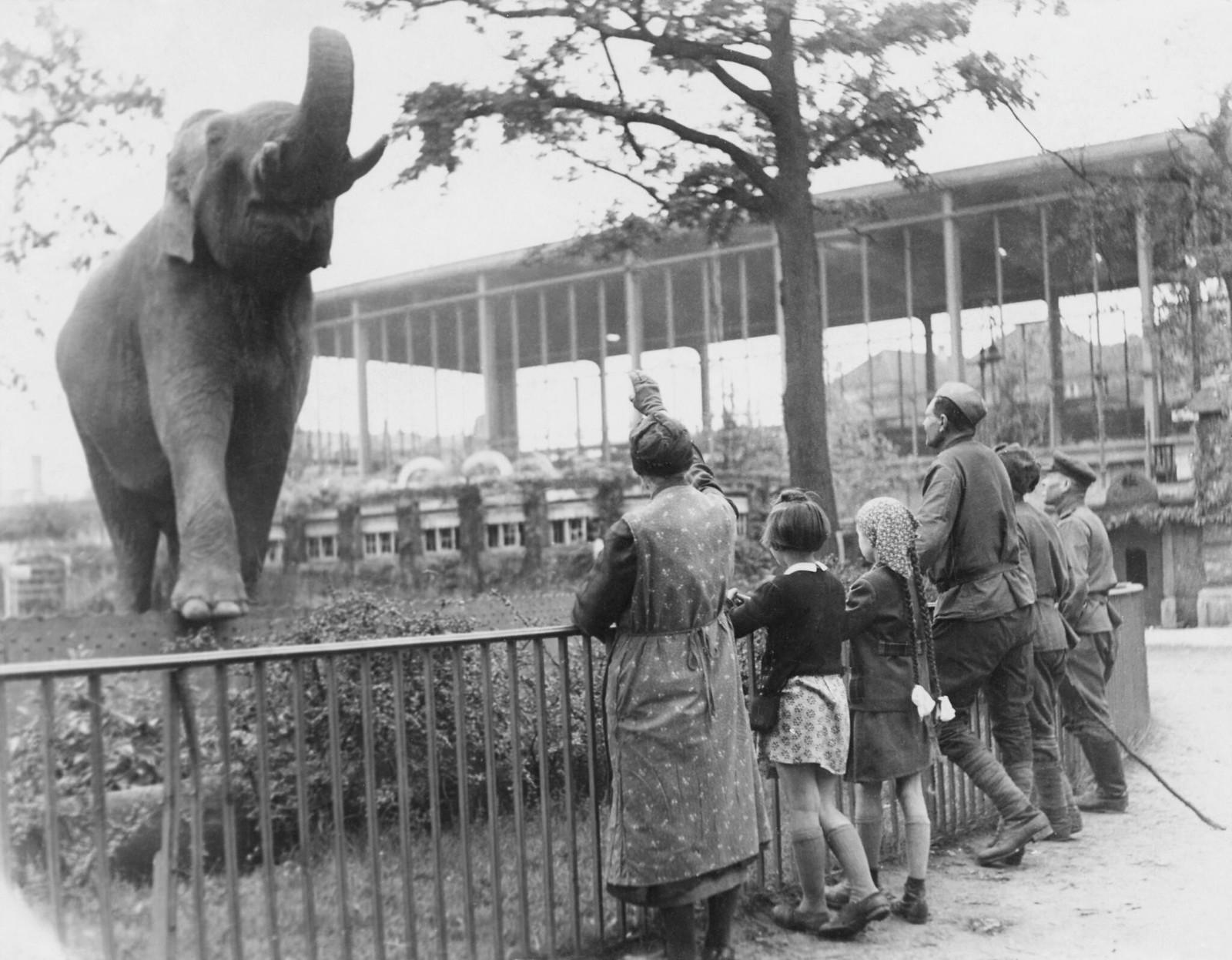 22. Советские солдаты посещают Зоологический сад в Берлине, май
