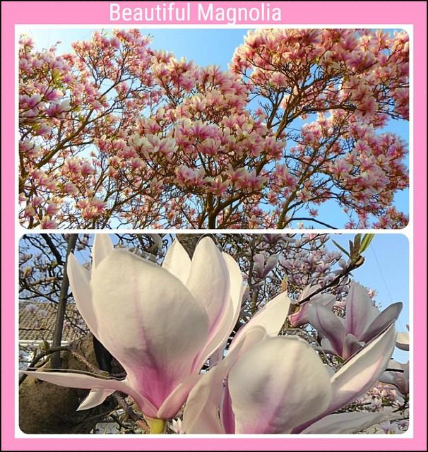In Full Bloom ..