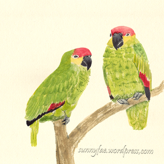 watercolour sketch of two green parrots