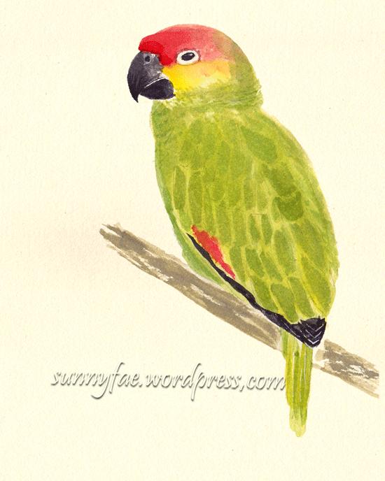 green parrot  watercolour sketch