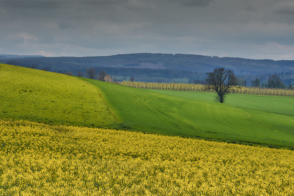 Fields and meadows in spring