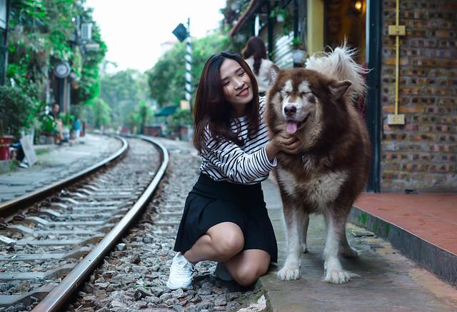 do you like dog