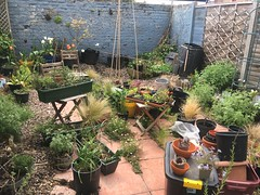 Garden chaos to new homes for plants and seedlings