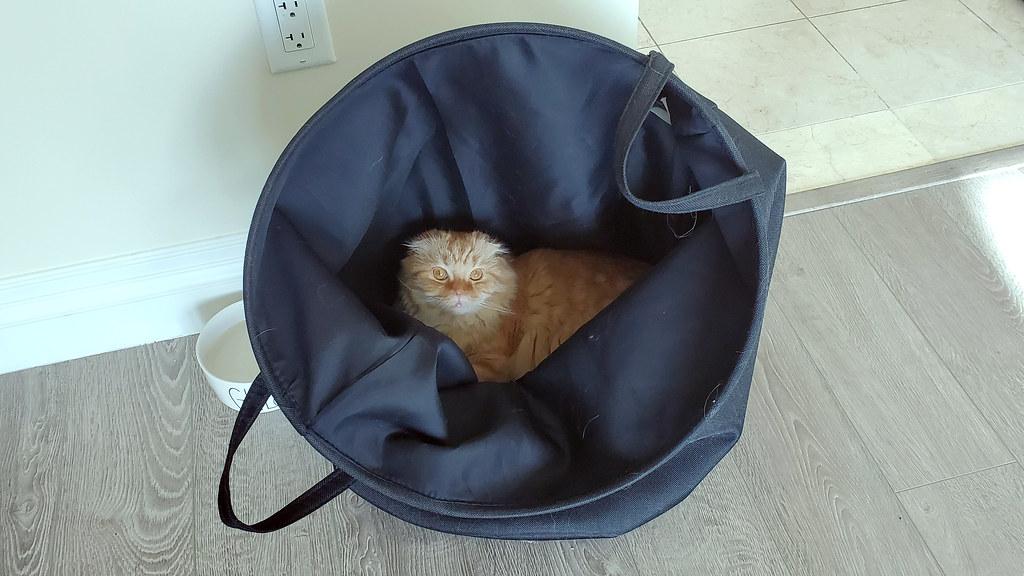 Pumpkin making his way into the laundry hamper