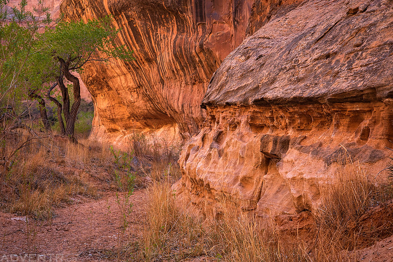 White Roost Canyon Wall