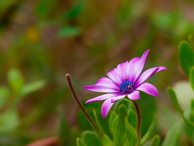 Le temps des fleurs ( In explore 10 05 2021 )