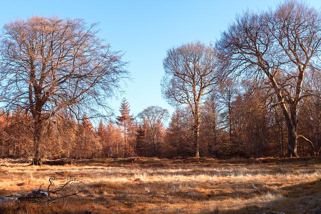 Woodland Gathering