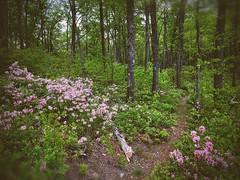 Rock Mount Trail, Shenandoah National Park, VA