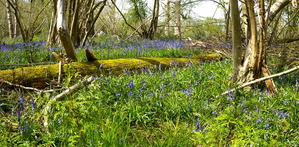 Stacklands Woods Kent