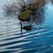 On Manzanita Lake
