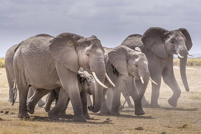 B éléphants-5302