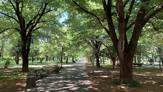 Njegošev park, Podgorica