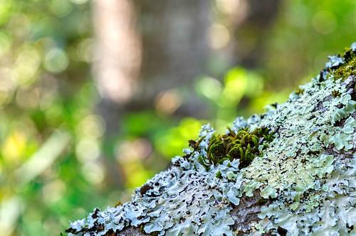 I'm lichen this one