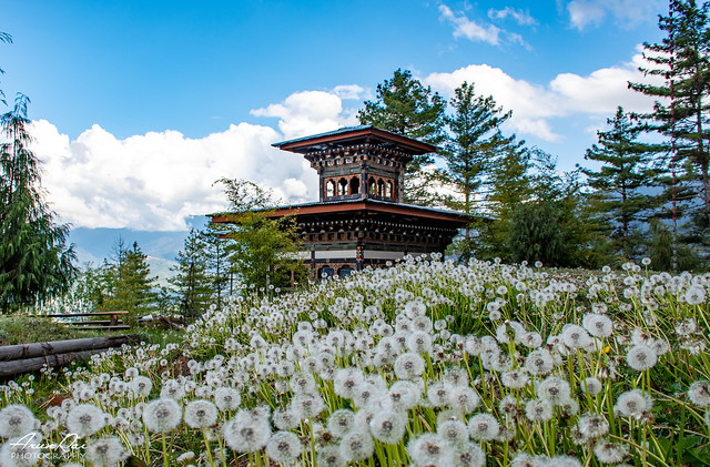 Temple in the middle of the dandelions in Bhutan