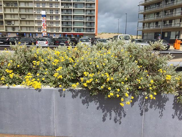 Flower boxes In Oostduinkerke , now Koksijde , Town on the North See in West Vlaanderen , West Flanders , Belgium June 8. 2019 ( en.m.wikipedia.org/wiki/Oostduinkerke)