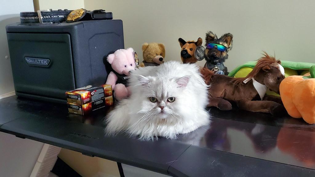 Pudding pretending he is a stuffed animal