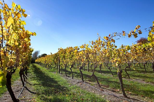 Martinborough Vineyard